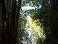 elora-gorge-conservation-area-1