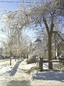 Moir Street looks magical with its icy coating after the Elora Ice storm, December 2013.