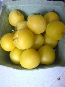 Yellow Plums From the Elora Farmers Market.